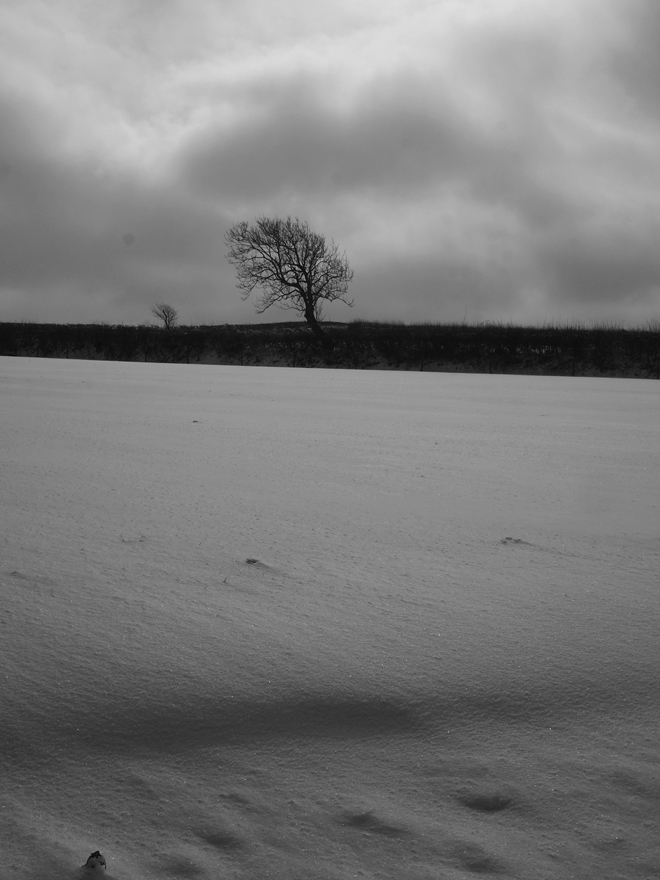 Tree and snow Gooseham